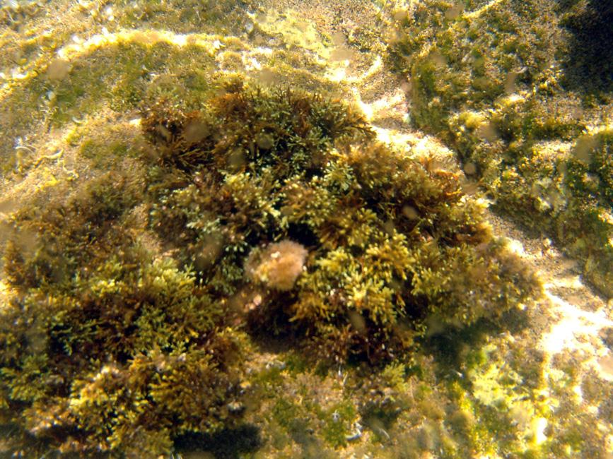 1 proba zdjec podwodnych
