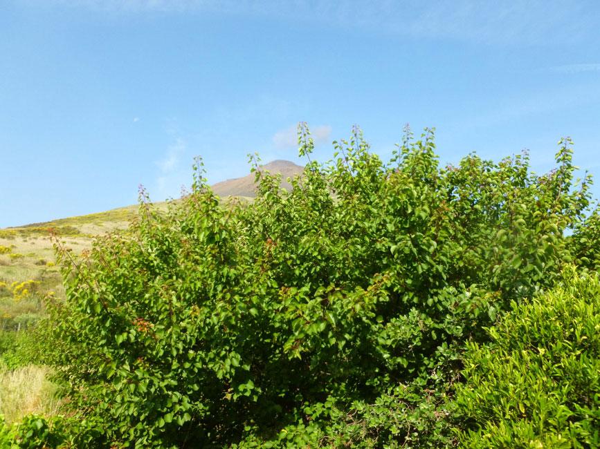 19 Widok z mojego okna przy lozku