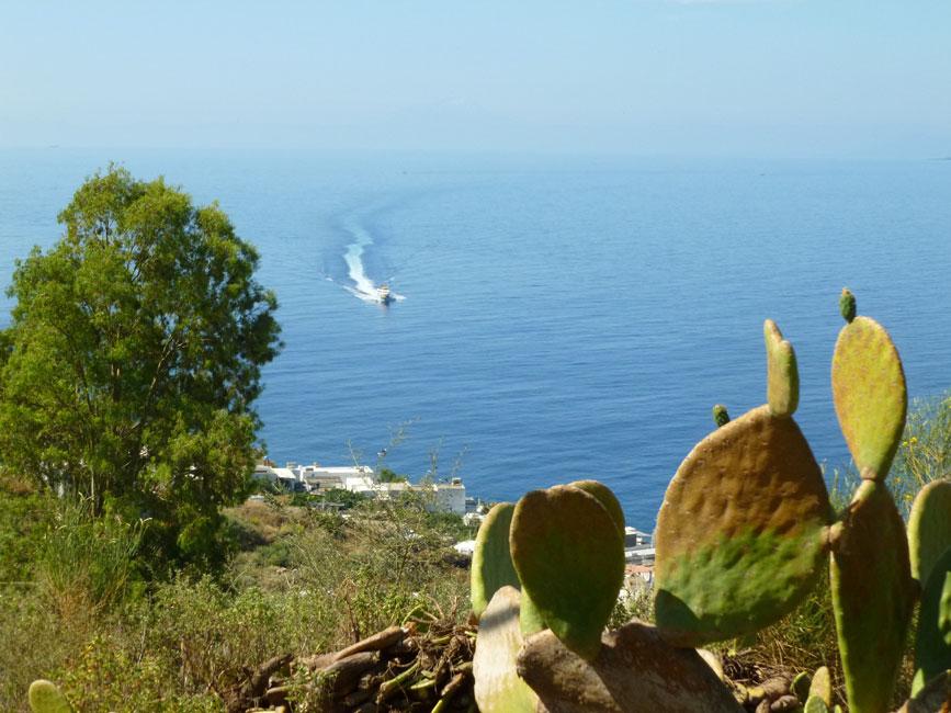 10 Widoczek z kaktusami i wodolotem