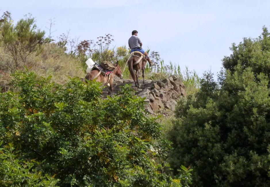 16 Jezdziec i jego muly