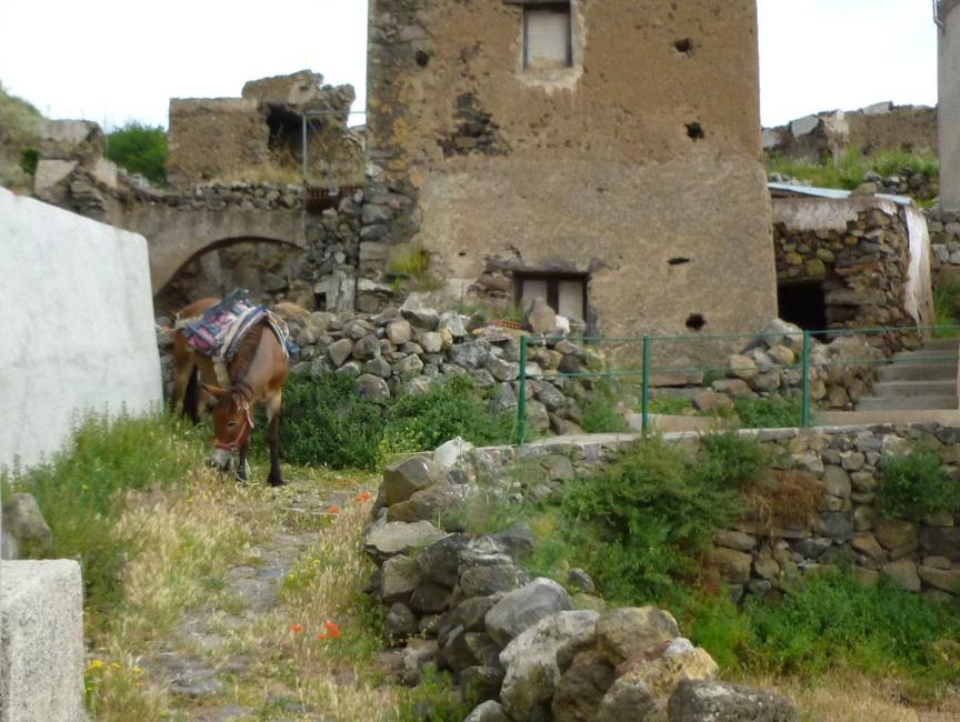 08 Tu odpoczywaja spotkane wczesniej muly