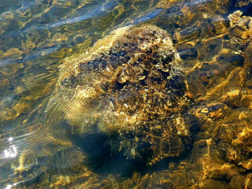 08 Glony morskie