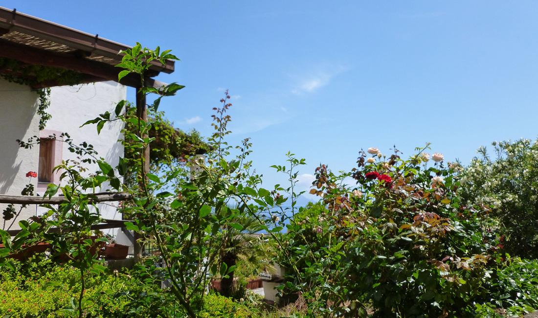 16 Domek w zieleni