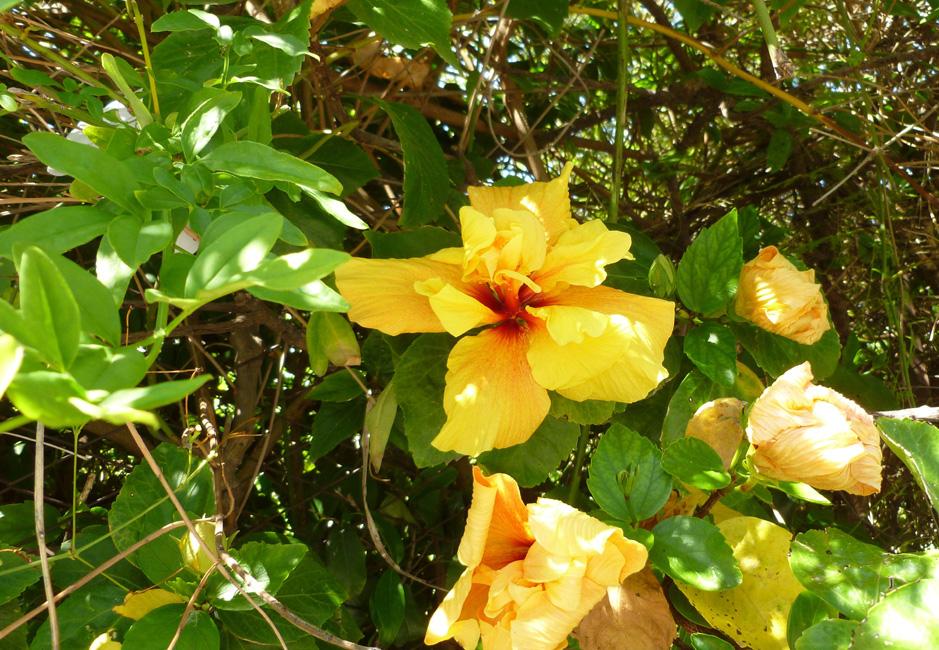 2 Tu pelno cudnych kwiatow