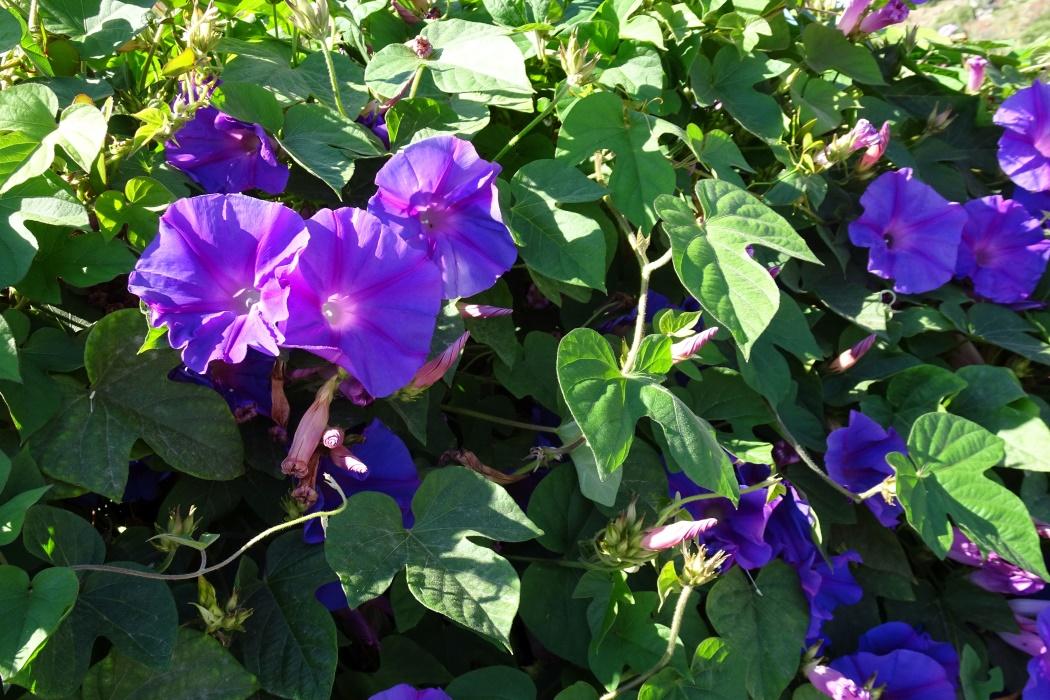 Mongiove, kwiatki